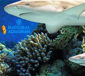 Shark Week 2014 : Discovery Channel