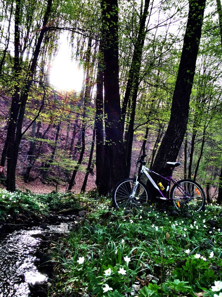 flowers, sunset, spring  #newgreen #spring #cycling #lady #sports #mountainbiking