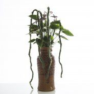 Anthurium Retro Style. This Adios® 'Chocolat' Anthurium is a beauty for the fall season. A retro style container matches perfectly and to balance this tall design, hanging strings of felt were added.