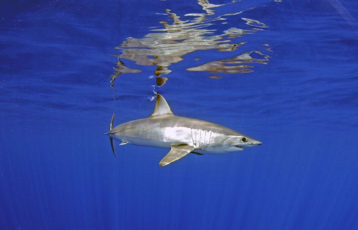 Images Requins on voit pendant notre extension au Cap