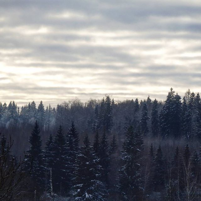 #winter #viewfrommywindow #forest #nature #sky #природа #лес #зима #видизокна