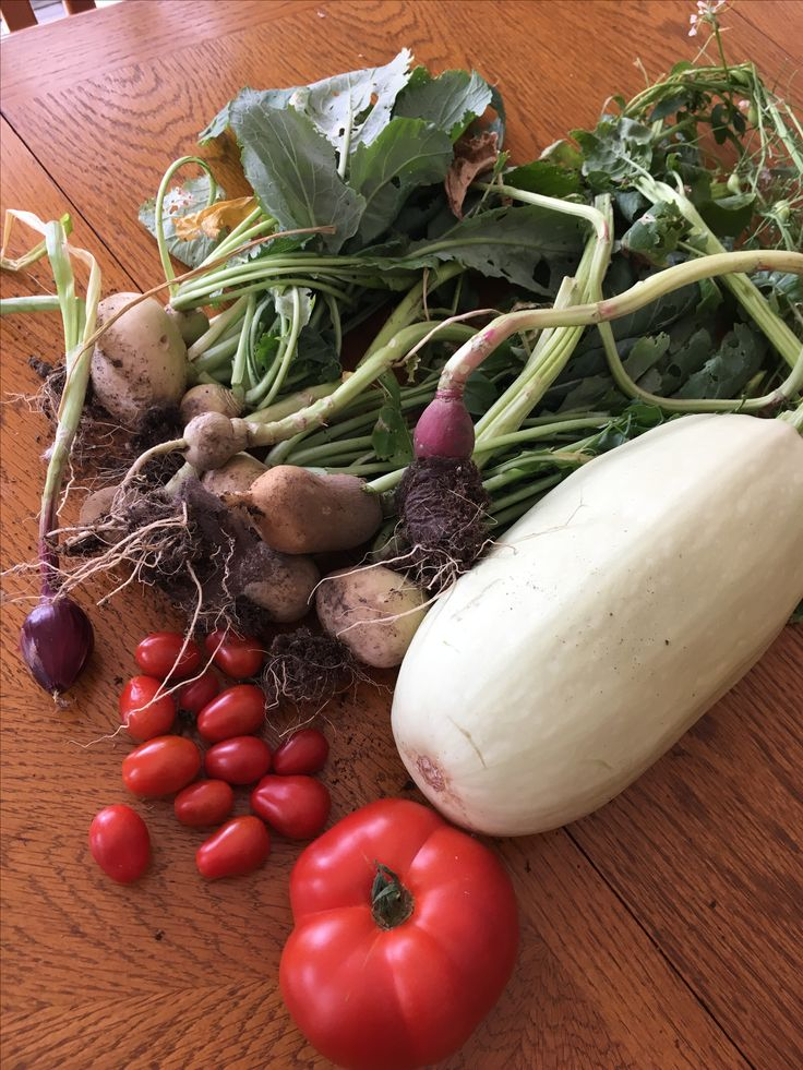Todays garden yield.  Stay tuned for new and easy and delicious spaghetti squash recipes at our Recipe Blog.