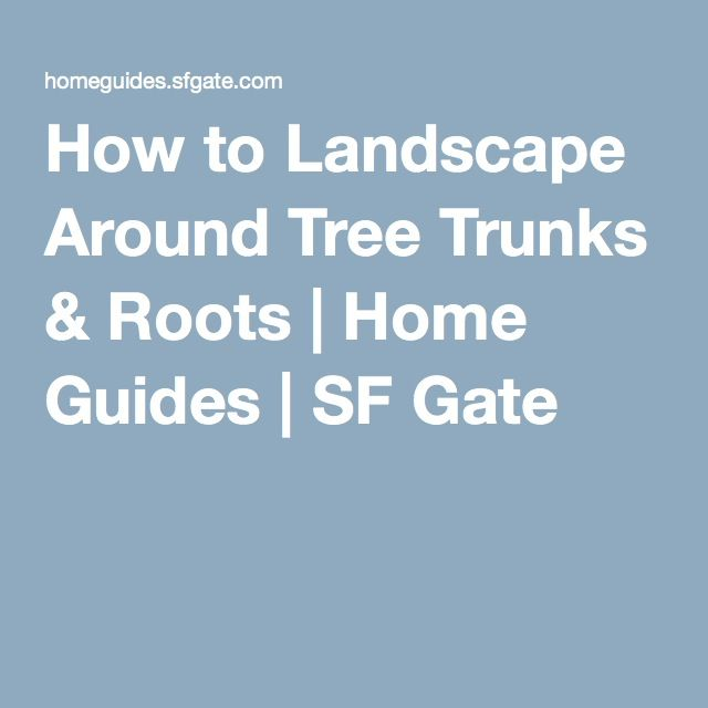 How to Landscape Around Tree Trunks & Roots | Home Guides | SF Gate