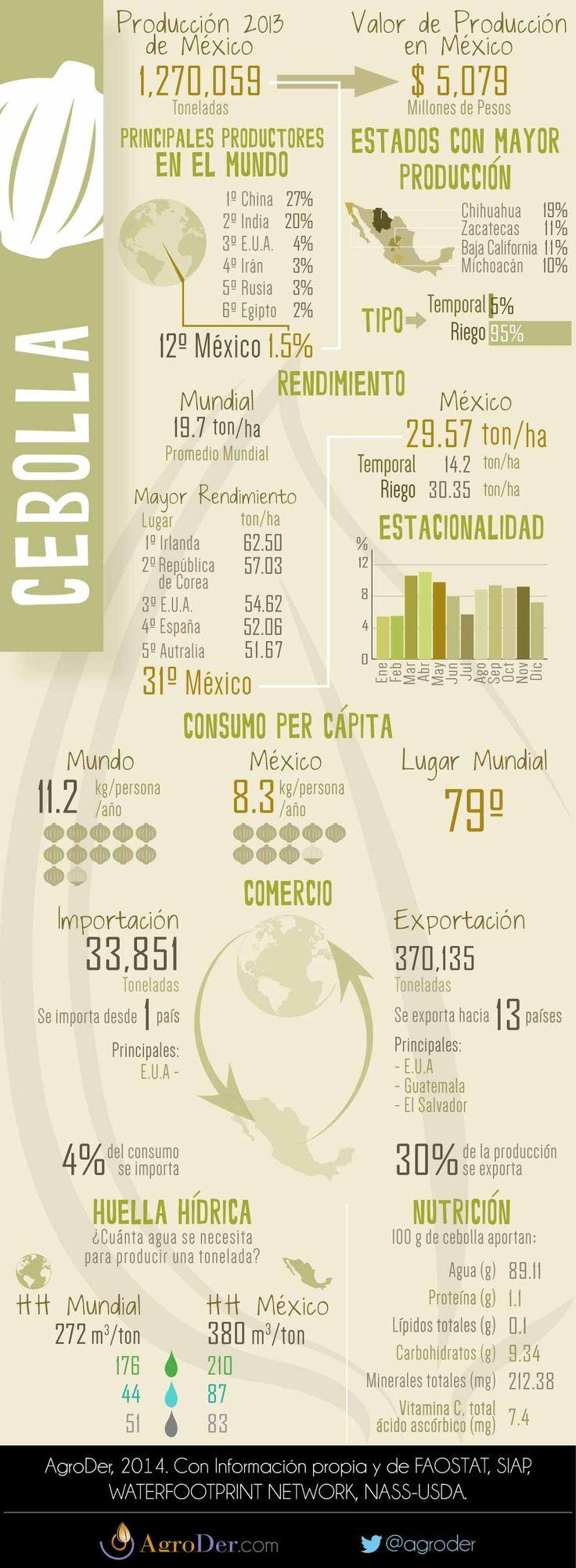 Infografía, Cebolla en México, 2013.
