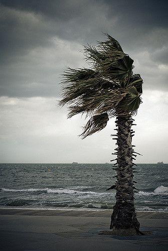 Windy   Flickr - Photo Sharing!