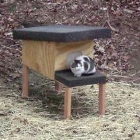 how to build a safe warm feral cat shelter