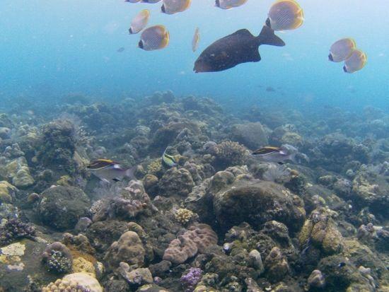 Immersioni a Bali nel relitto di Tulamben » Viaggiare da Soli |
