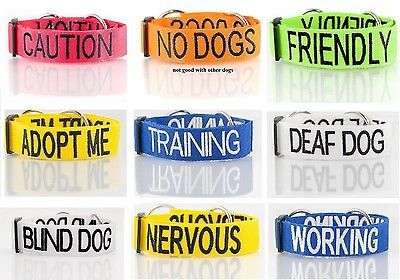 FRIENDLY DOG, NO DOGS, CAUTION, ADOPT ME, TRAINING, DEAF DOG, BLIND DOG, NERVOUS, WORKING LEASHES OR COLLARS. **