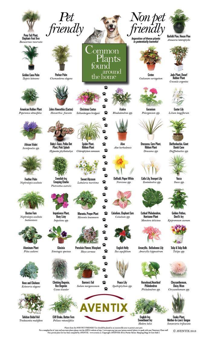 Plants That Are Safe Not Safe For Pets Plants Poisonous Plants Indoor Plants