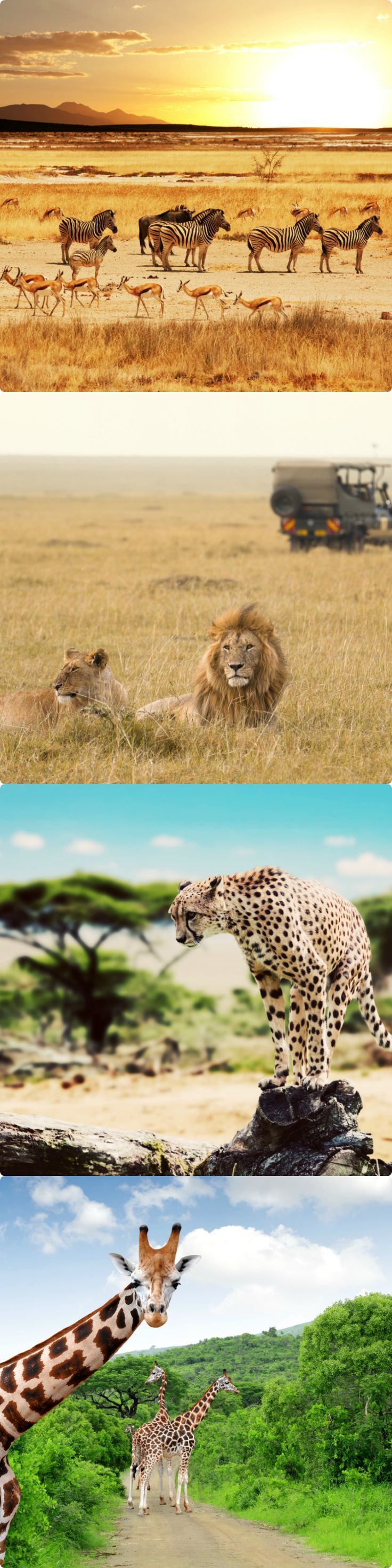 10 Best safari destinations in the world   Easy Planet Travel - World travel made simple