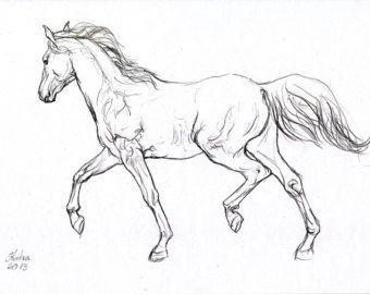 framed drawings of horses - Google Search