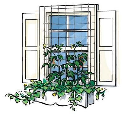 Vertical vegetables: grow climbers from window box with netting in from on the window. From Vertical Vegetables & Fruit: Creative Gardening Techniques for Growing Up in Small Spaces by Rhonda Massingham Hart on The Telegraph.