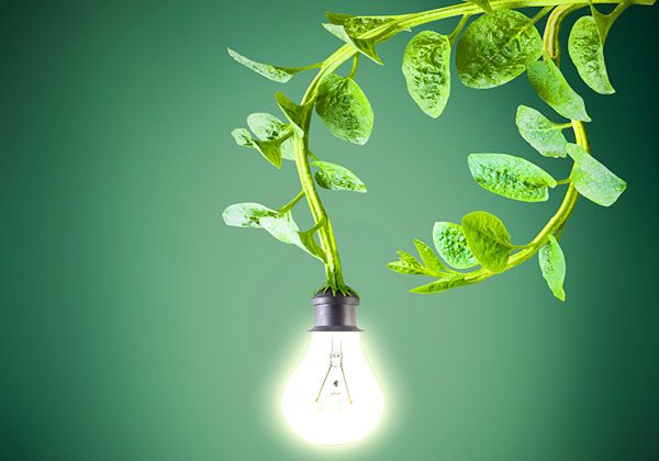 Dutch Company Powers Street Lights with Living Plants