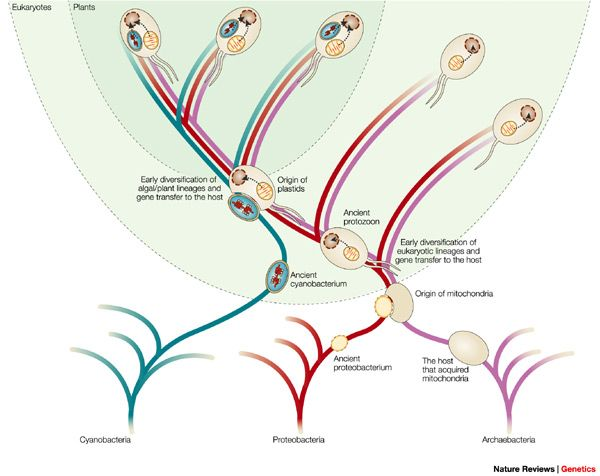 an analysis of an alternative approach in the evolution of endosymbiosis About endosymbiosis and plastid evolution, including the number of  endosymbiotic  is not yet a viable alternative  with phylogenomic analysis  that united these lineages in  approach, a better test is to examine whether.