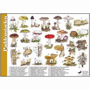 Herkenningkaart paddenstoelen (Jasper de Ruiter)