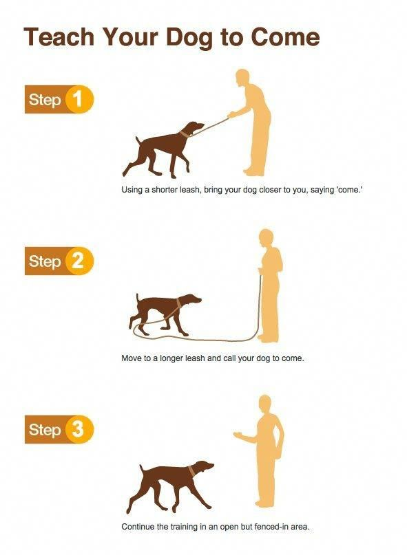 Dog Training Teach Your Dog To Come Dog Training Puppy