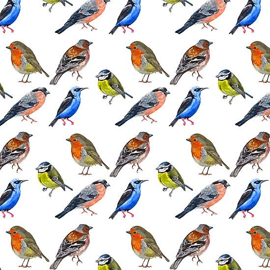 Watercolor Birds #bird #art #watercolor #print #pattern #animal #drawing #painting #Illustration #birds