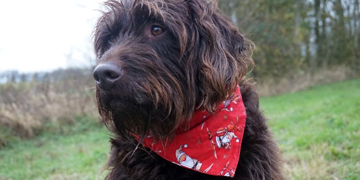 Cosy Christmas Santa Dog Bandana from waggycampers.co.uk! Check out Create Staff Picks here for more lovely pet gifts: http://bit.ly/1U6Qhmn