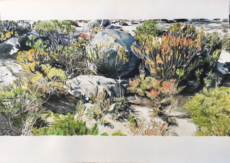 Karin Dando - watercolor on paper - 105cm x 75cm Fynbos on Table Mountain - landscape painting - 2017