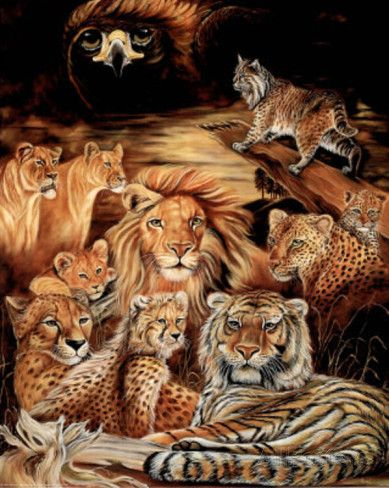 Wild Cat Montage Art Print Poster Posters Big Cats Art