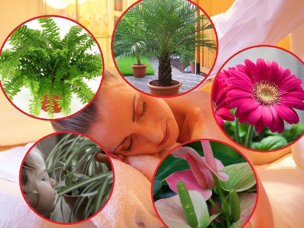 Rosliny Doniczkowe Oczyszczajace Powietrze W Mieszkaniu House Plants Mirror Table Plants