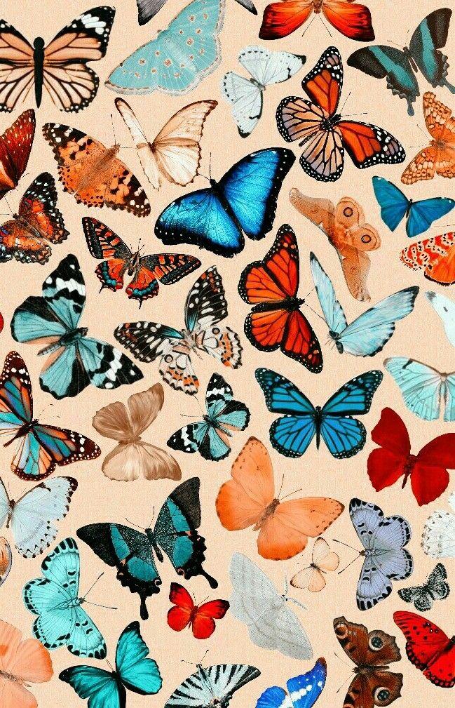 Butterfly Wallpaper Vsco Wallpapers Wallpapers That Are Cute Vsco Aesthetic Wallpaper Butterfly Wallpaper Butterfly Art Painting Hippie Wallpaper