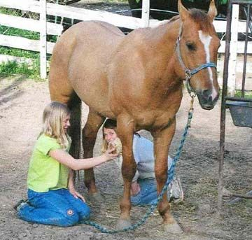 Horseman Tips - Think Like a Horse ® - almost 200 practical tips on how to handle, train, ride, and care for a horse!