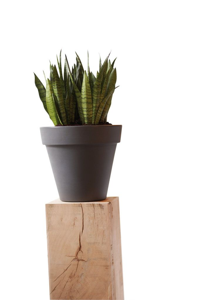 potted plants in working space. Tips: