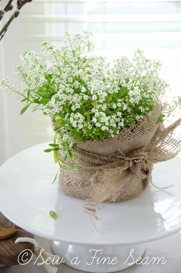 Dainty white alyssum in a burlap pot. Love the femininity of the flower against the rustic burlap.