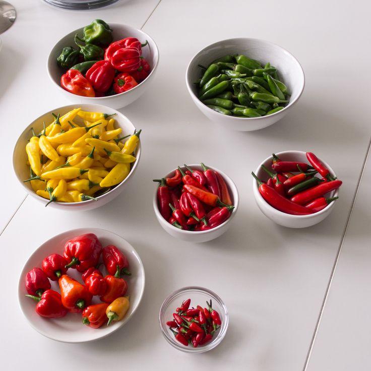 Second big harvest of chili. Varieties: Red Habanero (chinense), Onza (annuum), Hot Lemon (baccatum), Serrano (annuum), Suave Red (chinense) and Orozco (annuum).