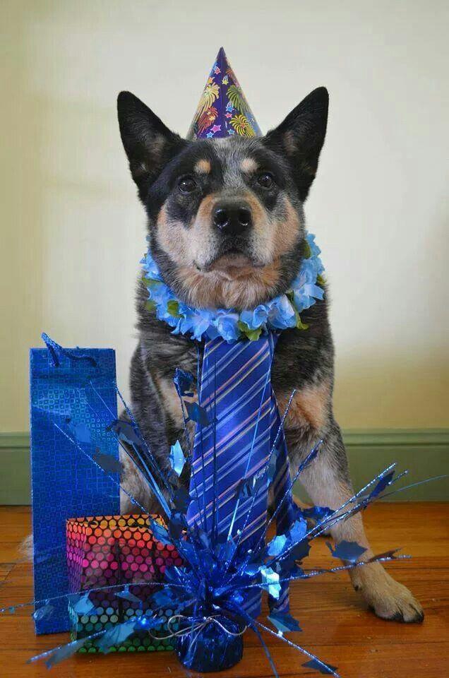 70 best Things I Love images on Pinterest Australian cattle dog