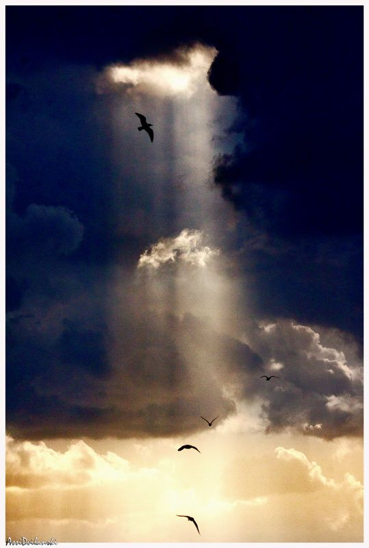 Birds in the heavenly rays