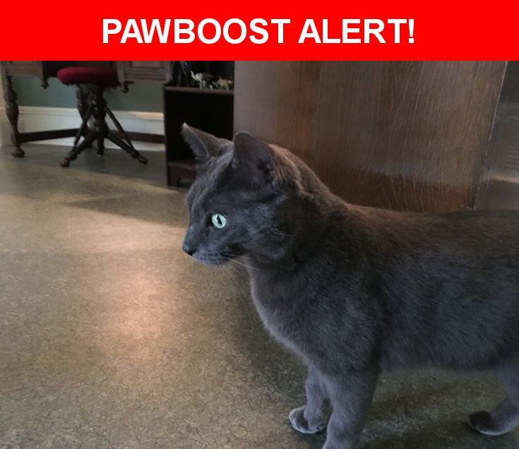 Please spread the word! Higgs was last seen in Anoka, MN 55303.  Description: Please call Sean at 612-703.3006 if found. Microchip Tag Number 0A14175C43. Rabies Tag Number 8688810.  Nearest Address: 6835 164th Lane NW Ramsey MN 55303