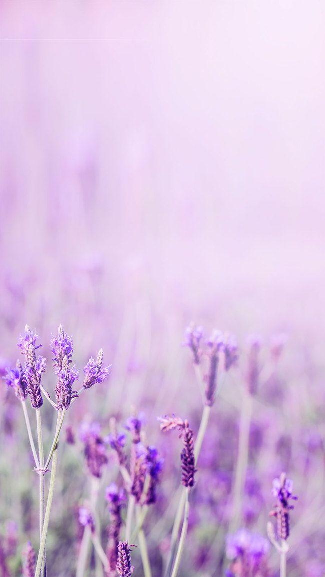 Lavender Flower Background : lavender, flower, background, Lavender, Purple, Aesthetic, Flower, Message, Background, Material, Vintage, Wallpaper, Patterns,, Flowers, Wallpaper,