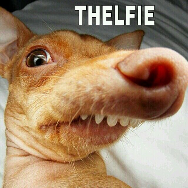 Phteven's thelfie. I love this little dog! His real name is Tuna.  Makes me laugh so much haha