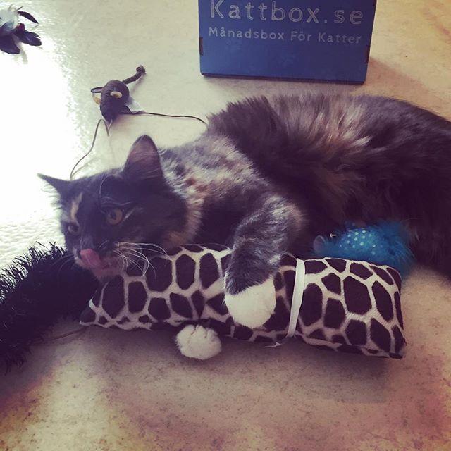 @Kattbox_se #Kattbox