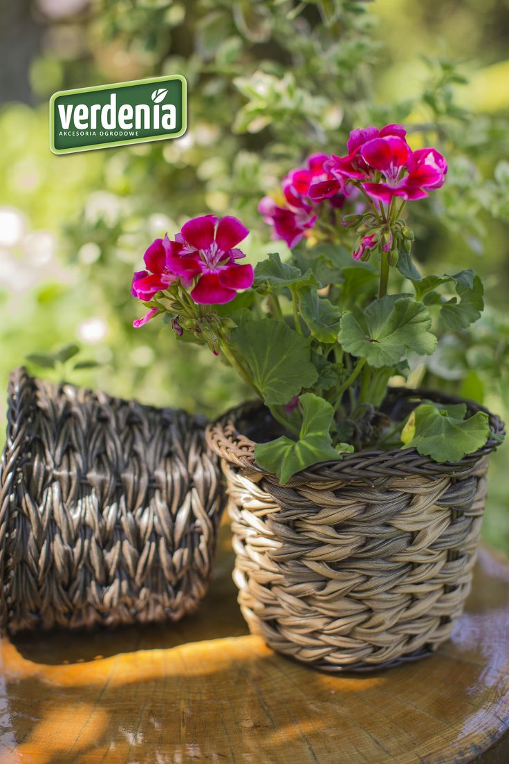 #osłonka #pot #doniczka #garden #ogród