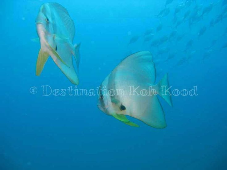 Koh Kood underwater life by Paradise Divers (Thailand)