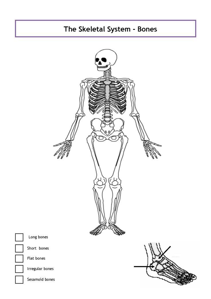 Unlabeled Diagram Of The Human Skeleton . Unlabeled ...