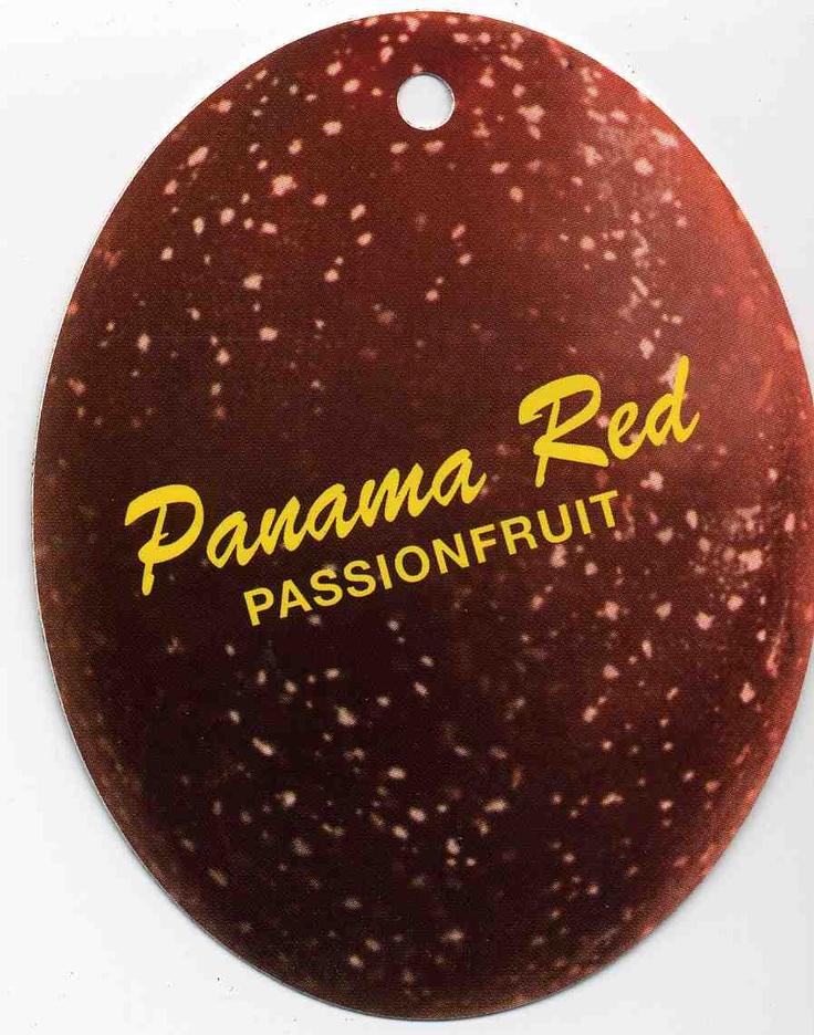 Panama Red Passionfruit - Passiflora Sp