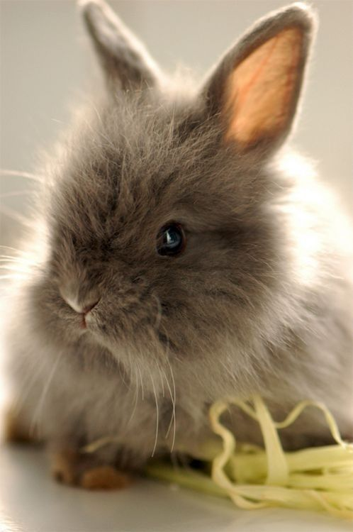 Bunny AKA Fuzzball  #cute #rabbit #animals