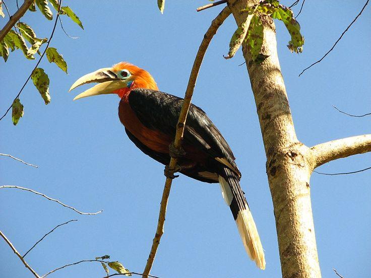 Kamlang Wildlife Sanctuary - in Arunachal Pradesh, India