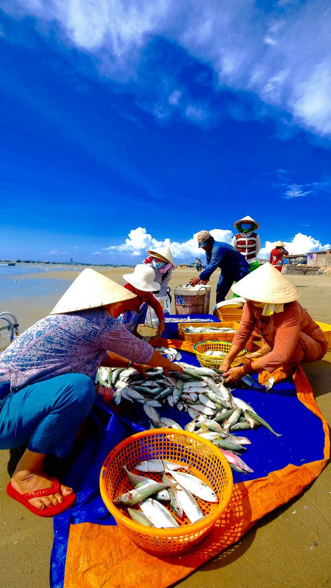 The Fishing Business, Long Hai, Vietnam