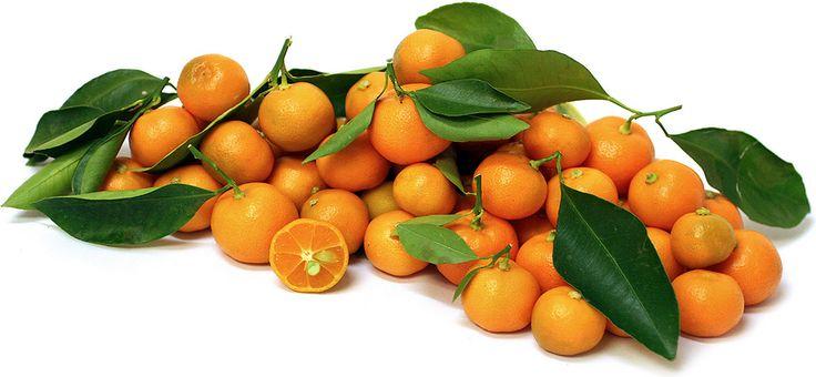 Calamondin Limes