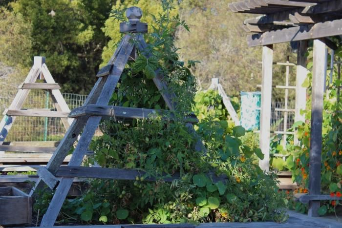A garden with no obstacles in mill valley gardens for Garden design mill valley