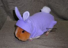 guinea+pigs+in+costumes | Cute Guinea Pig Costumes | Re: Costumes for guinea pigs