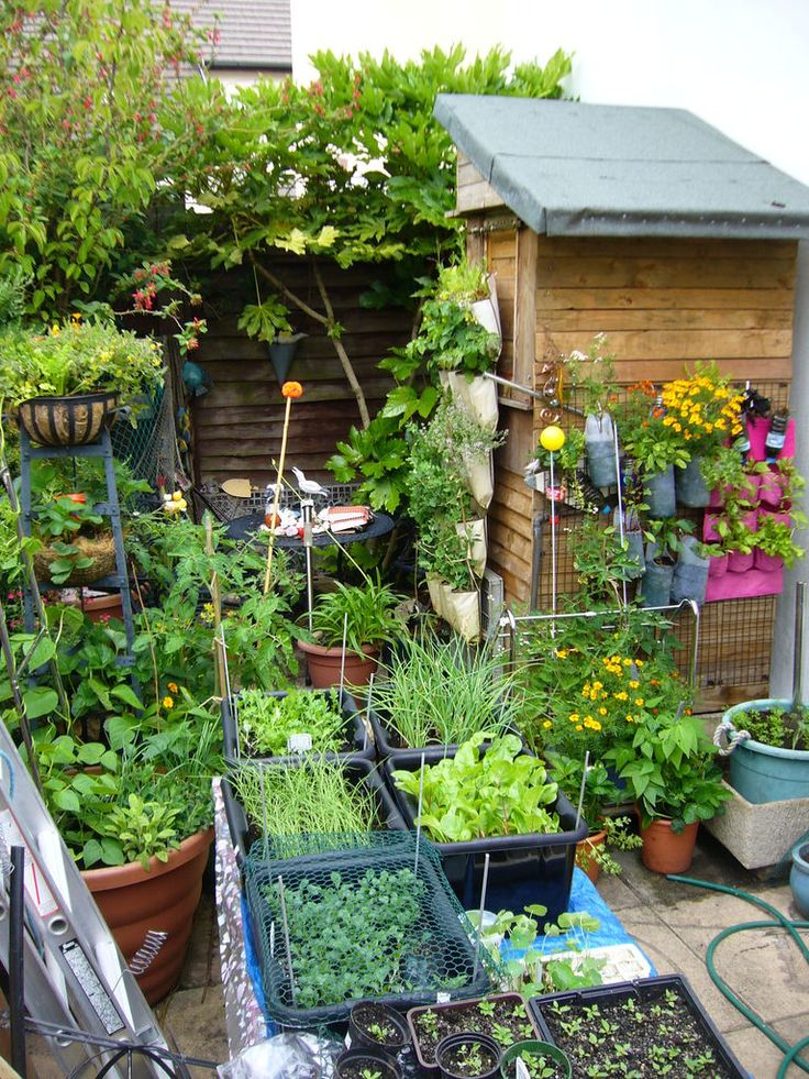 "28 Tips For A Small Garden: VERTICAL VEGETABLES: ""Grow Up"" In A Small Garden And"