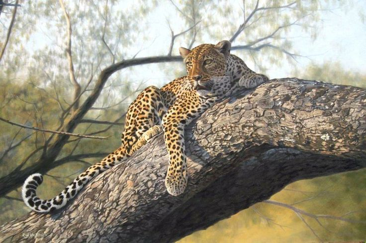 Leopard painting by Rob Macintosh