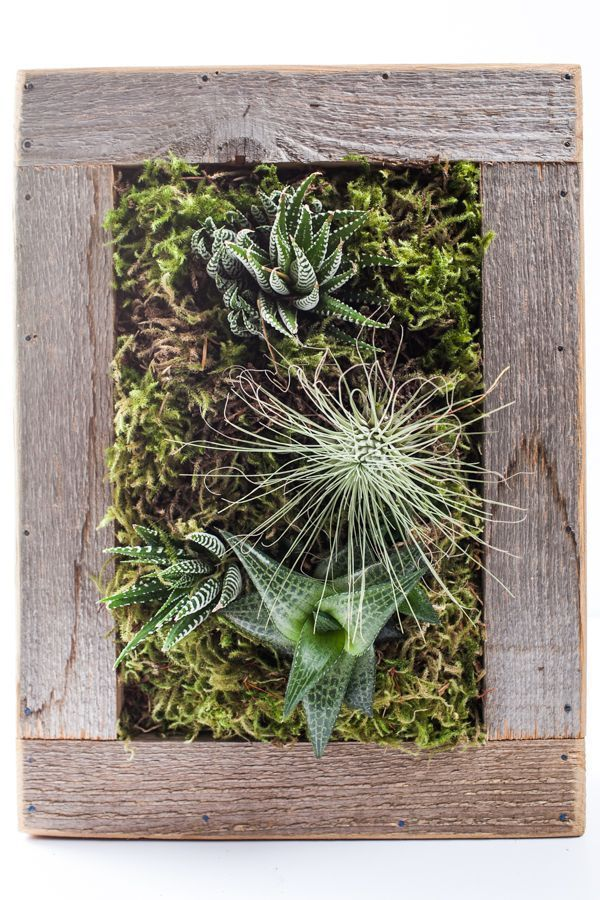 144 Best Succulents Images On Pinterest Succulents
