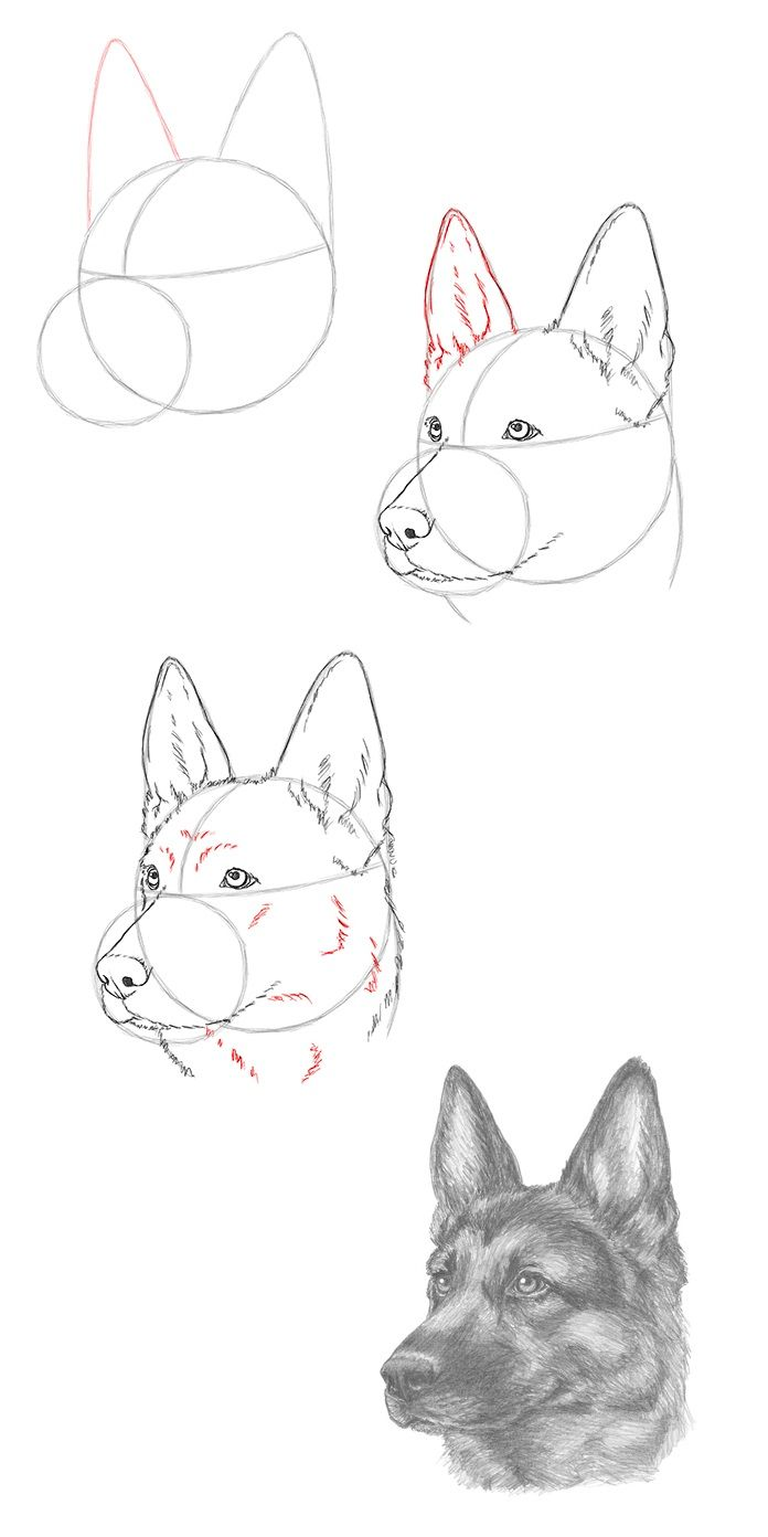 Draw A German Shepherd Dog Dog Drawing Tutorial Animal Drawings Dog Drawing